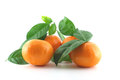 Ripe fresh mandarines with green leaves over white Royalty Free Stock Photo