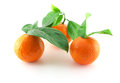Ripe fresh mandarines with green leaves over white Stock Photo