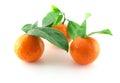 Ripe fresh mandarines with green leaves over white Stock Photo