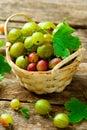 Ripe, fresh, organic gooseberries Royalty Free Stock Photo
