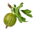 Ripe gooseberry Stock Photos
