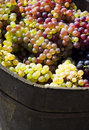 Ripe grape in bucket Royalty Free Stock Photography