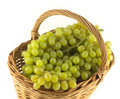 Ripe grape bunches in wicker basket isolated close up lot of with green berries brown on white Stock Image