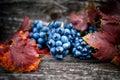 Ripe Grapes On Autumn Harvest ...
