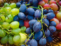 Ripe grapes different varieties of Royalty Free Stock Photography