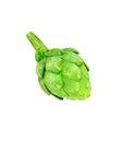 Ripe green artichoke vegetable isolated Royalty Free Stock Photo