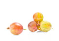 Ripe green and red gooseberries Royalty Free Stock Photo
