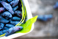 Ripe Honeysuckle Berries in Bowl Royalty Free Stock Photo
