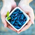 Ripe Honeysuckle Berries in Bowl, Macro Shot Royalty Free Stock Photo