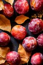 Ripe Juicy Big Red Plums Dry Yellow Orange Leaves on Black Stone Background. Autumn Fall Composition. Vibrant Colors. Royalty Free Stock Photo