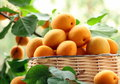 Ripe juicy fruit apricot with leaves Stock Image