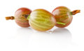 Ripe juicy gooseberry Royalty Free Stock Photos