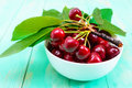 Ripe juicy red cherries in a ceramic bowl Royalty Free Stock Photo