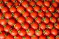 stock image of  Ripe juicy tomatoes