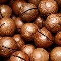 stock image of  Ripe macadamia nuts close up