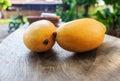 Ripe mango onwood twos stock photo Stock Image