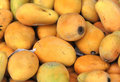 Ripe mangoes Stock Images