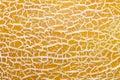 Ripe melon peel texture close up Royalty Free Stock Photo