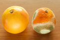 Ripe and moldy grapefriut on wooden table difference between healthy rotten fruit organic food nutrition Royalty Free Stock Photo