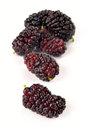 Ripe mulberry on white background Royalty Free Stock Photos