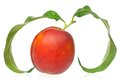 Ripe nectarine red isolated on white background cutout Royalty Free Stock Image