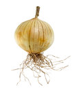Ripe onion in white background fruit isolate Royalty Free Stock Photography