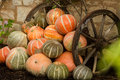 Ripe orange pumpkins stacked photo closeup of whole fresh between old rusty wheels on autumn day harvest time on countrified Royalty Free Stock Photos