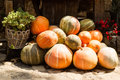 Ripe orange pumpkins stacked photo of whole fresh on sunny autumn day harvest time on countrified background horizontal picture Stock Photo