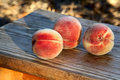Ripe peaches beautiful in the sunlight on the old board Royalty Free Stock Photos