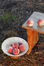 Ripe peaches in a vase and on a small garden bench Stock Image