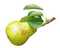 Ripe pear isolated Stock Photo