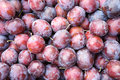 Ripe plums photography a lot of Stock Photography