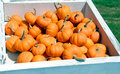 Ripe pumpkins in large box Stock Photos