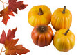 Ripe pumpkins and leaves Royalty Free Stock Photography