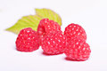 Ripe raspberries isolated on a white background Royalty Free Stock Images