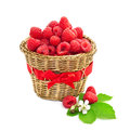 Ripe raspberry Royalty Free Stock Photo