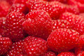 Ripe raspberry the red piled a background from Royalty Free Stock Photos