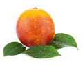 Ripe red blood oranges with green leaves isolated on white backg background closeup Stock Photo