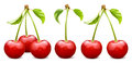 Ripe red cherry vector illustration