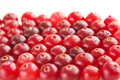 Ripe red cranberry background laid in neat rows Stock Image