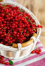 Ripe red currant in the basket Royalty Free Stock Image