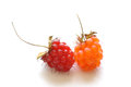 Ripe red and orange wild raspberries Royalty Free Stock Photo
