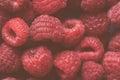 Ripe red raspberries macro Royalty Free Stock Photo