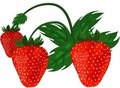 Ripe red strawberries. Stock Image