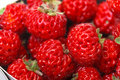 Ripe red strawberries photo of closeup Royalty Free Stock Photo
