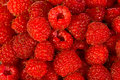 Ripe  red wild raspberries Stock Photography