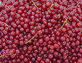 Ripe redcurrant Stock Photos