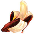 Ripe single fruit, half peeled red open banana isolated, watercolor illustration on white