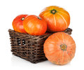 Ripe small pumpkins in basket on white background Royalty Free Stock Images