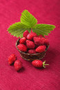 Ripe strawberries in a bowl Royalty Free Stock Photo